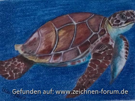 Wasserschildkröte mit Polychromos